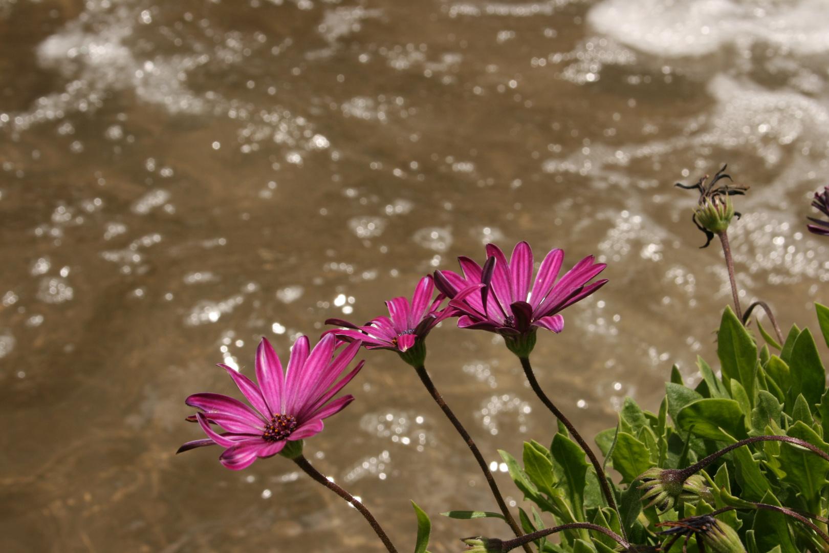 Blume am Ufer