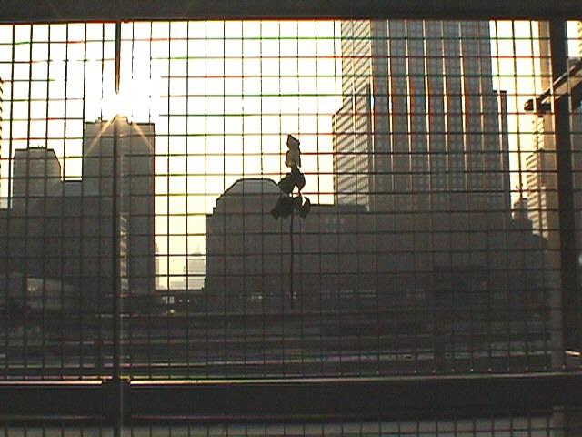 Blume am Zaun von Ground Zero 2004
