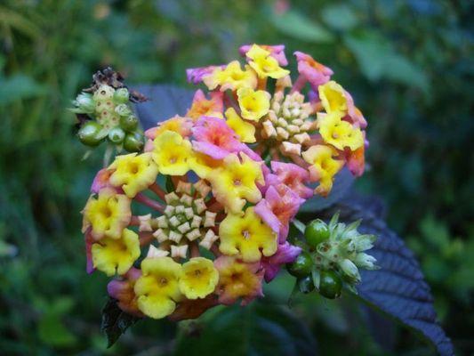 Blume auf Madeira