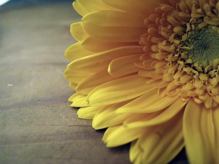 Blume auf meiner Kommode die -2- =)