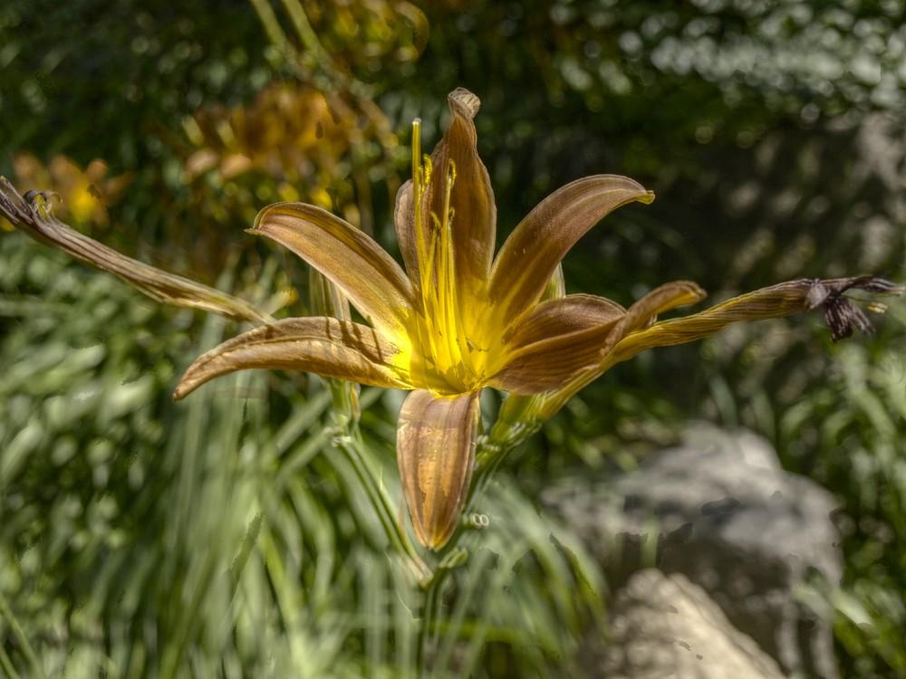 Blume bei meiner Tante im Garten