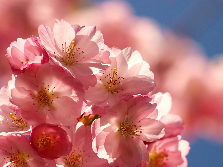 Blume, Blume, Blume, Blume...