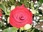 Blume der Liebe ;-)