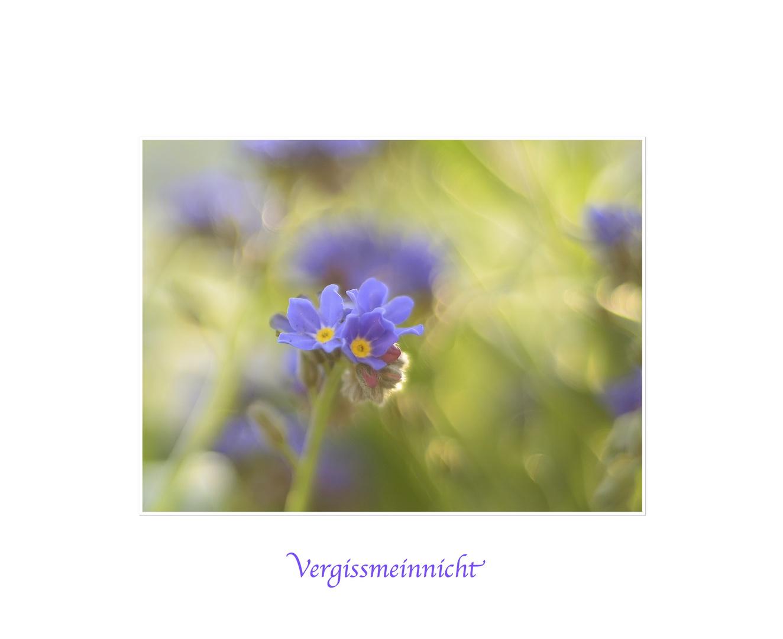 Blume der Treue