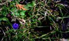 Blume, die Zweite.