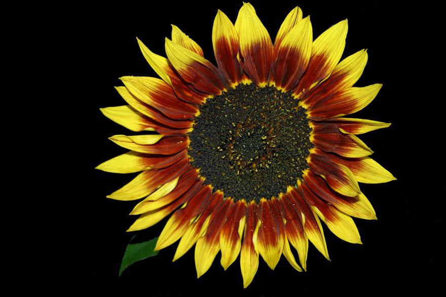 Blume für Dich.....