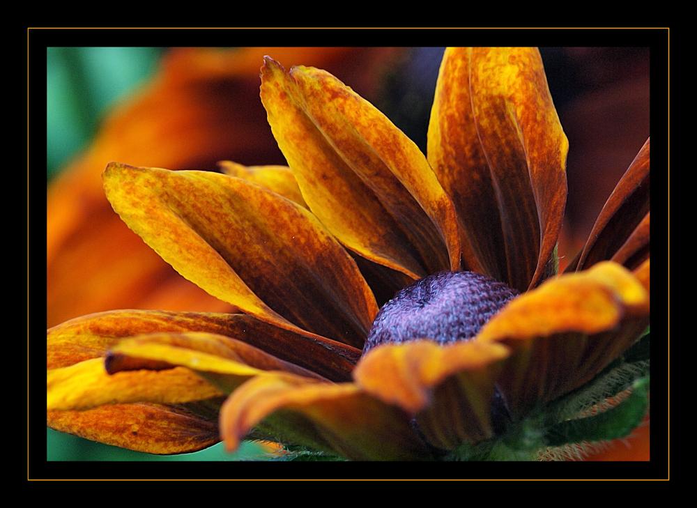 Blume ganz nah