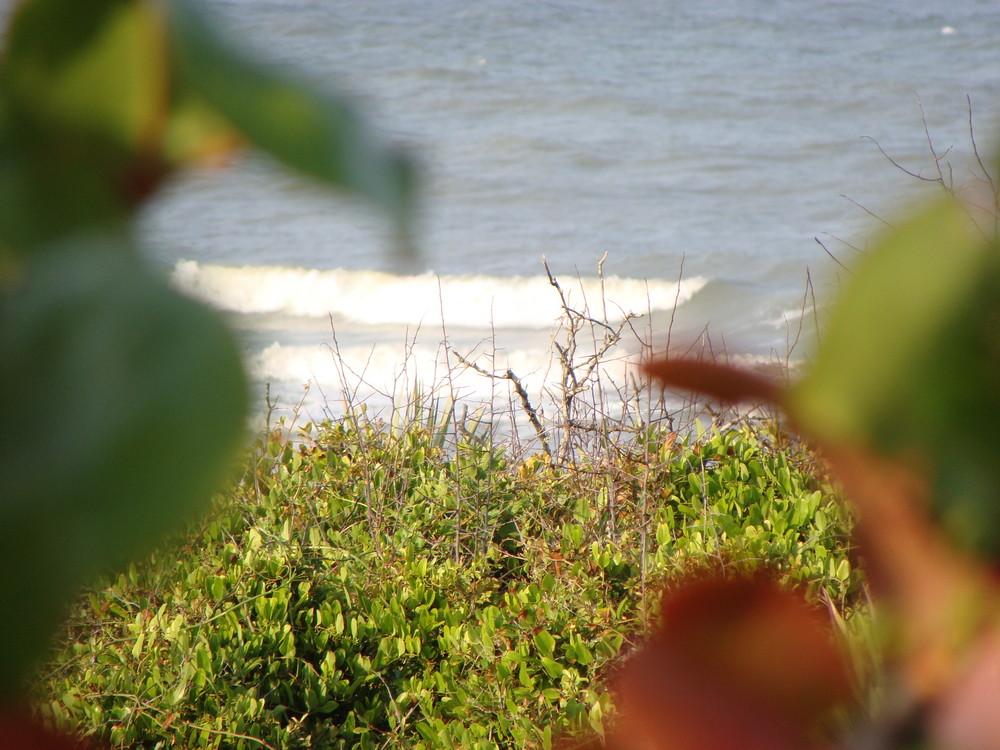 Blume gegen Meer