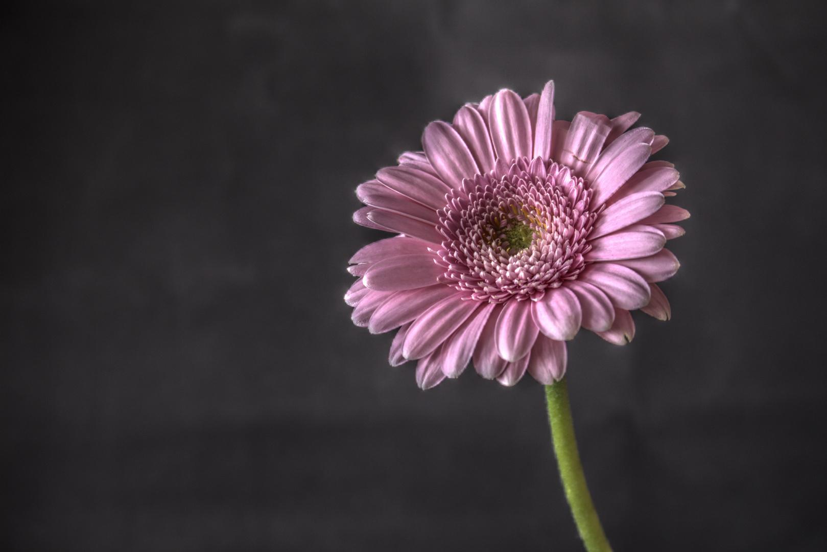Blume HDR