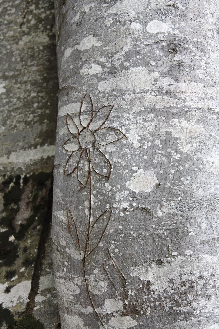 Blume im Baum