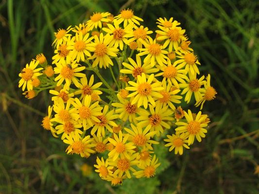 Blume im Blumenbeet