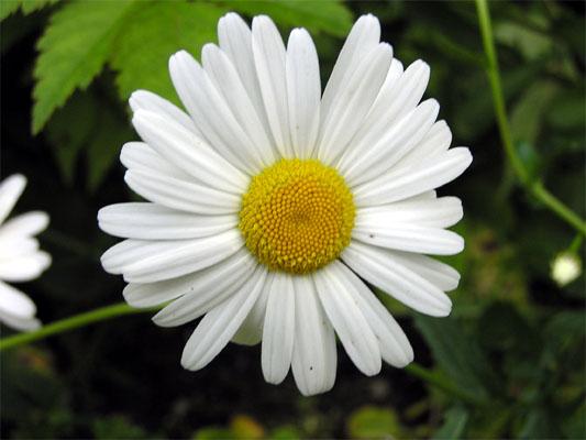 Blume im Detail