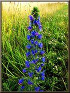 Blume im Feld