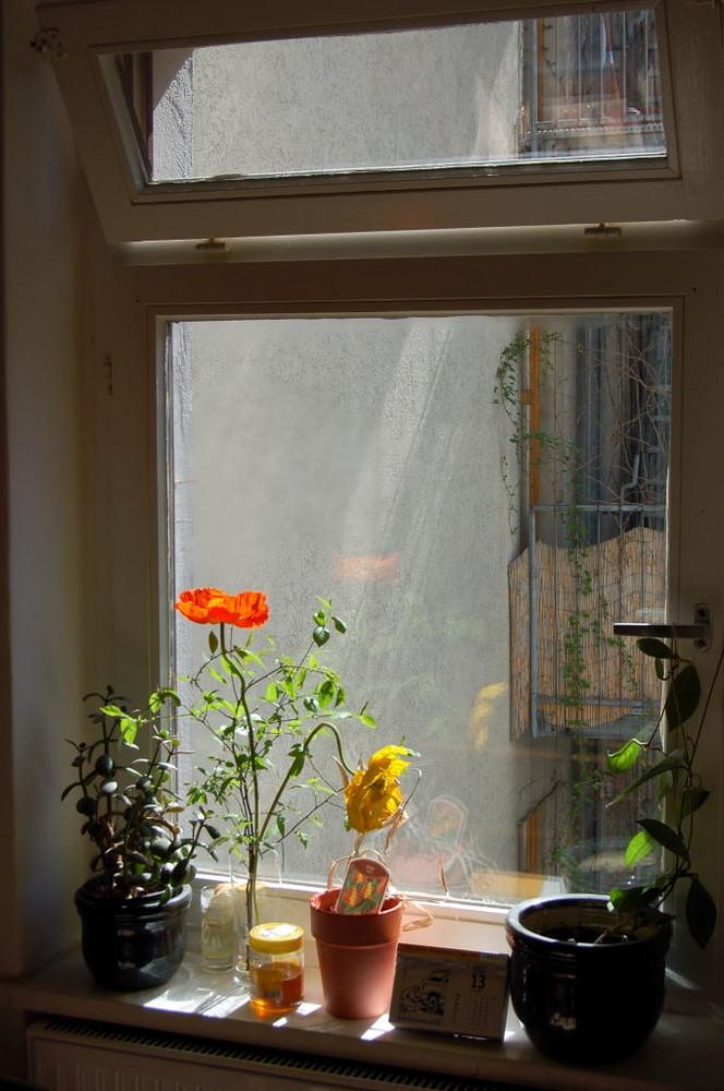 Blume im Fenster