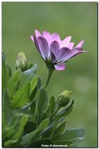 Blume im Garten