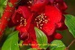 Blume im Gebüsch