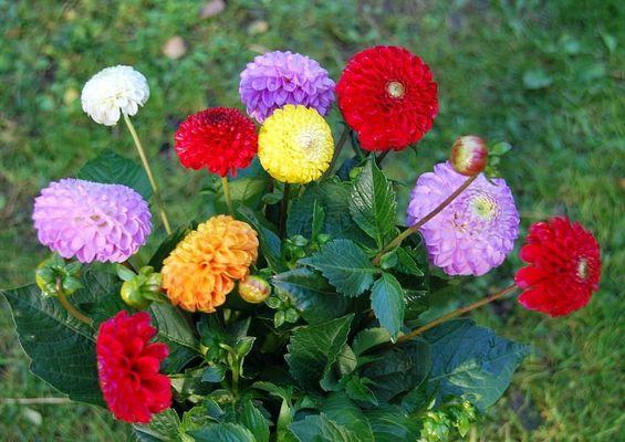 Blume im Herbst:)