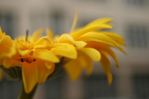 Blume. Im Hintergrund Berlin.