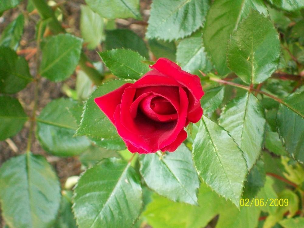 Blume im Juni