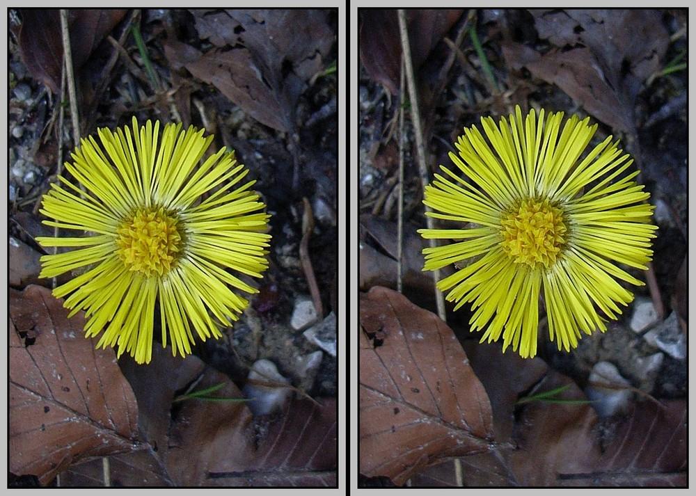 Blume im Laub 3D