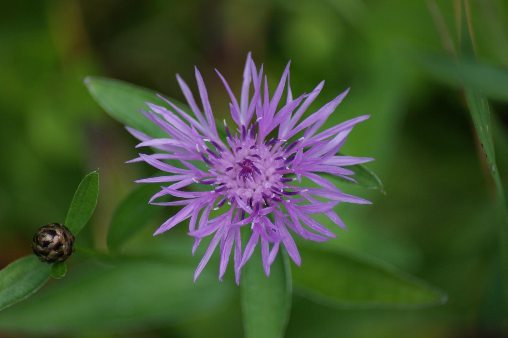 Blume im Moor
