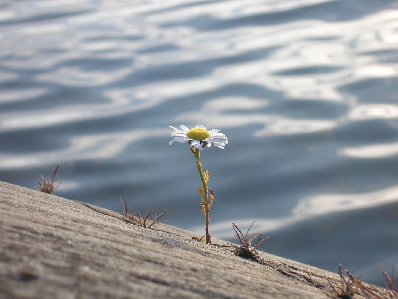 Blume im Schärengarten