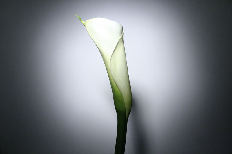 Blume im Scheinwerferlicht!