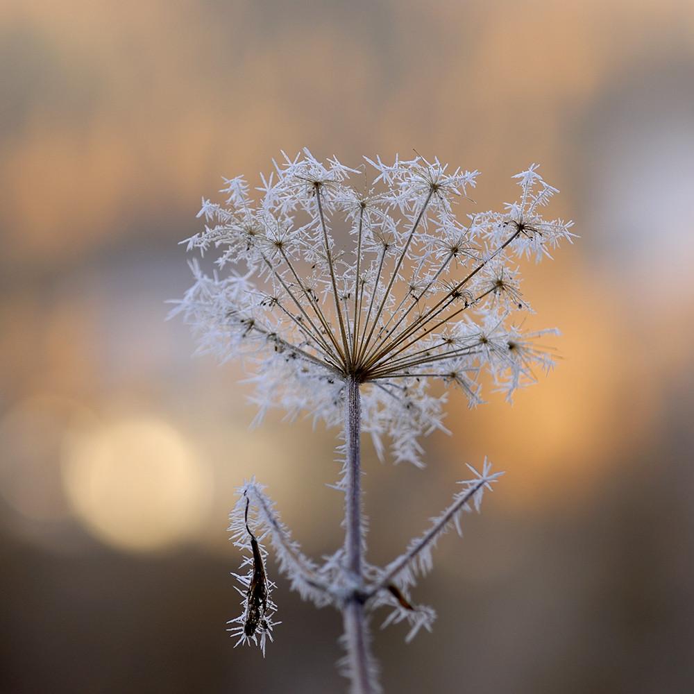 blume im schnee foto bild pflanzen pilze flechten bl ten kleinpflanzen natur bilder. Black Bedroom Furniture Sets. Home Design Ideas