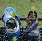 Blume im Schuh