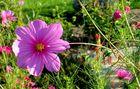 Blume im Sommer