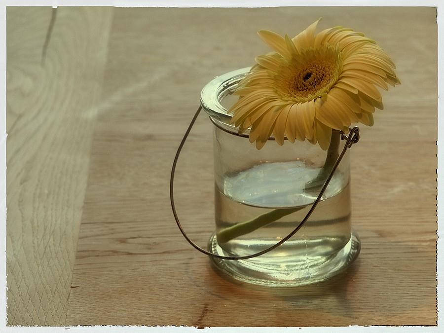 Blume im Wasserglas