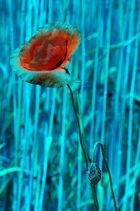 Blume in Blau