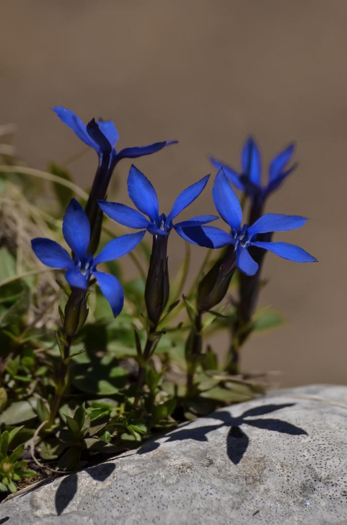 Blume in der Mittagssonne