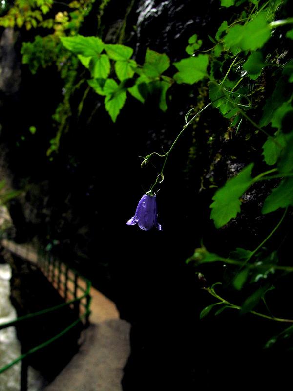 Blume in der Schlucht