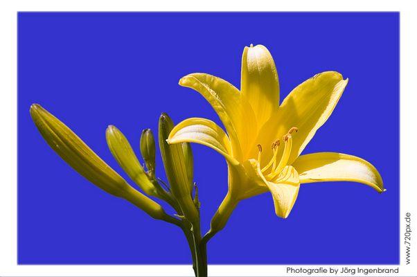 Blume in der Sonne
