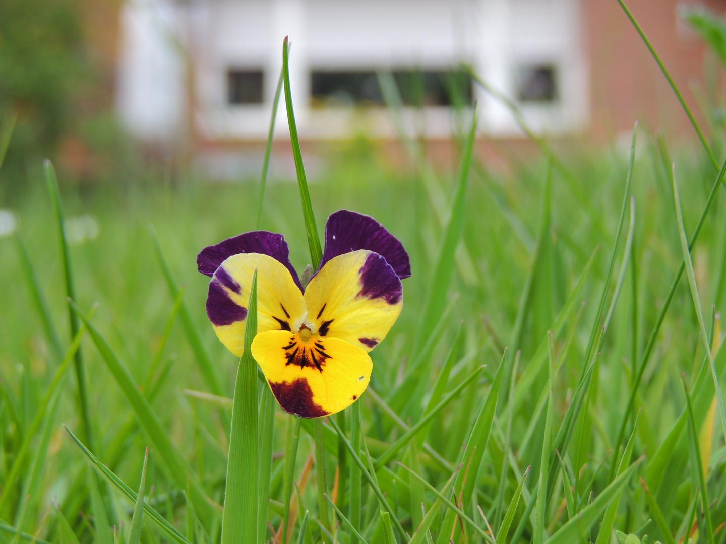 Blume in der Wiese