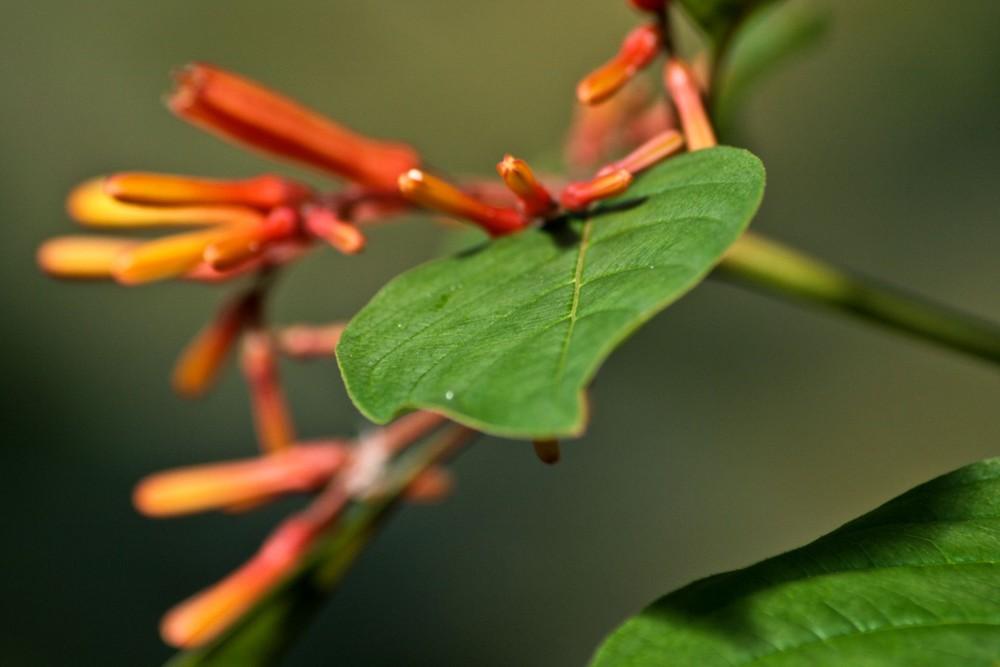 Blume in der Wilhelma aufgenommen
