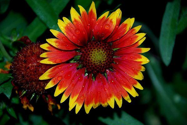 """""""Blume in Farbe"""""""
