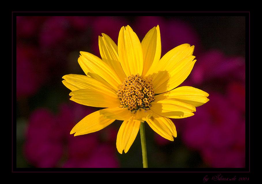 Blume in Omas Garten ! :)