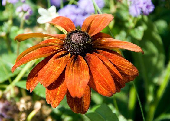 Blume in Orange...