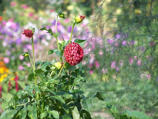 Blume in Polen
