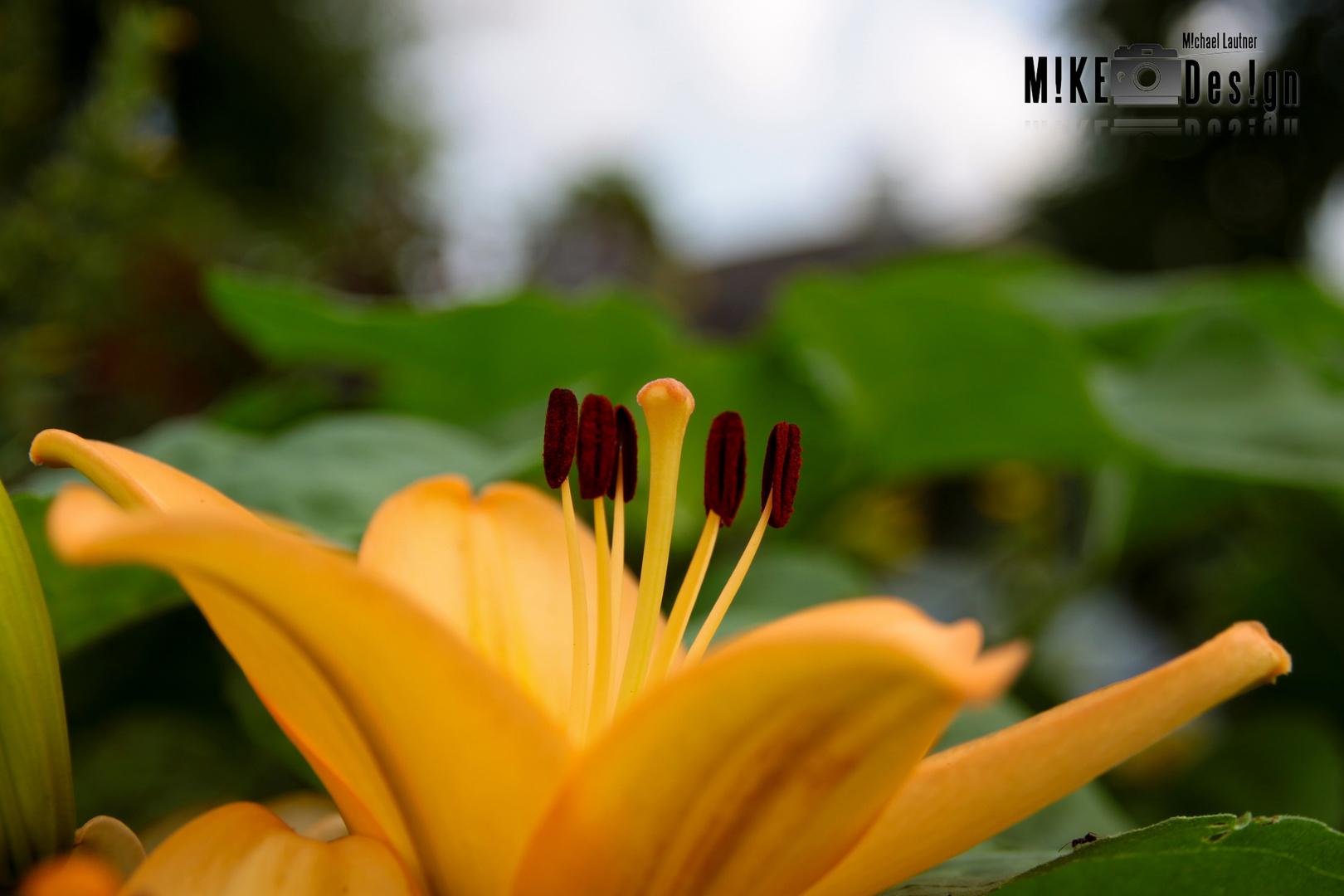Blume in unserem Garten