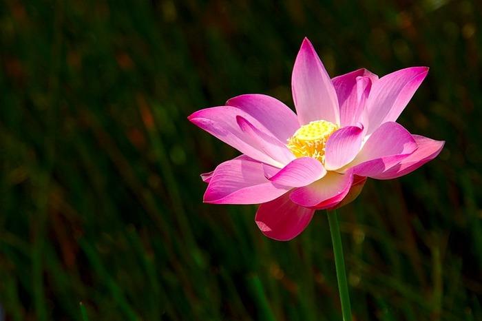 Blume in wahrer Pracht!