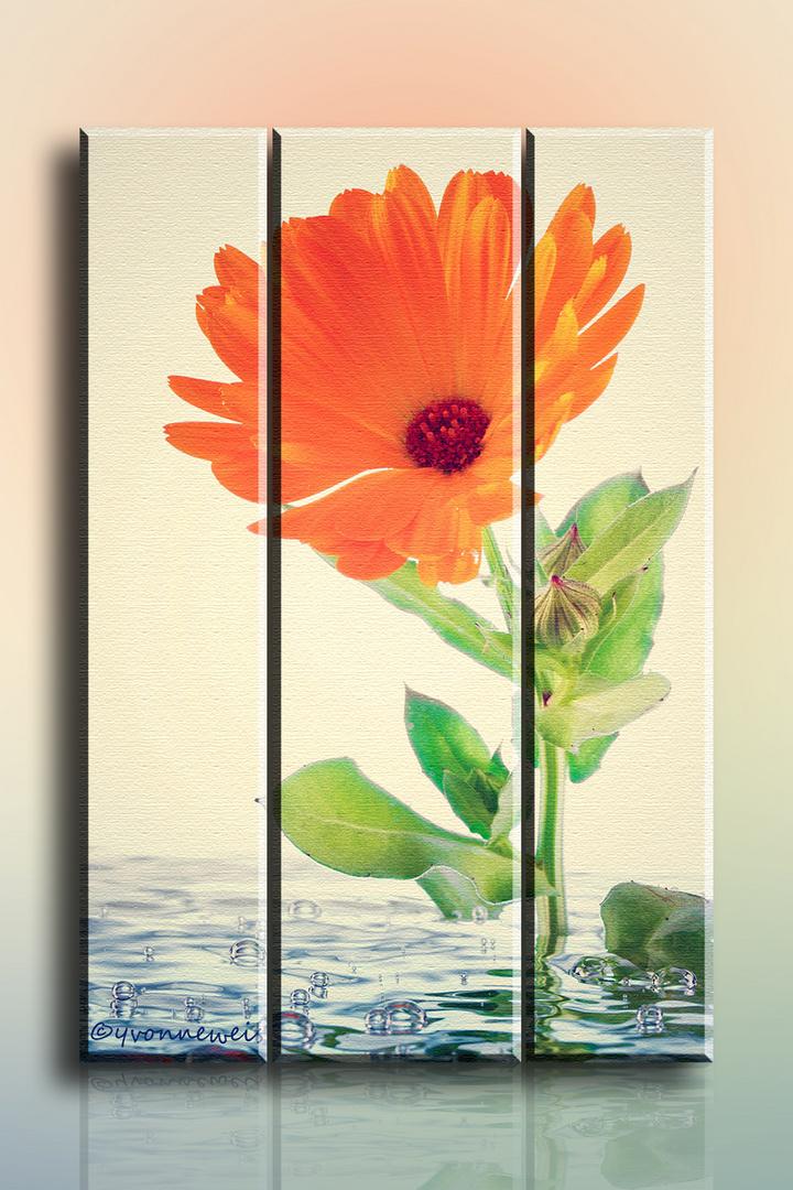 Blume in Wasser