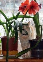 Blume Katze 2
