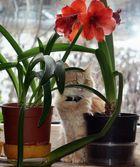Blume + Katze