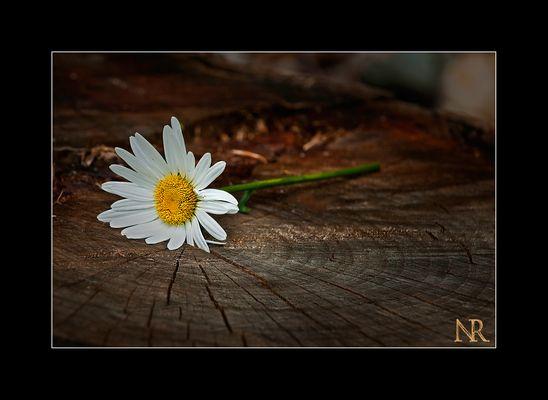 Blume mal anders