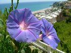 Blume mit Aussicht