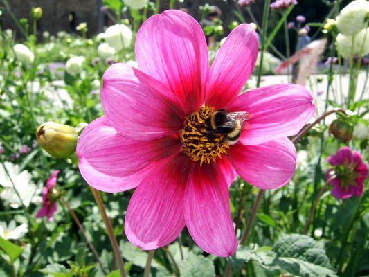 Blume mit Besuch. :)