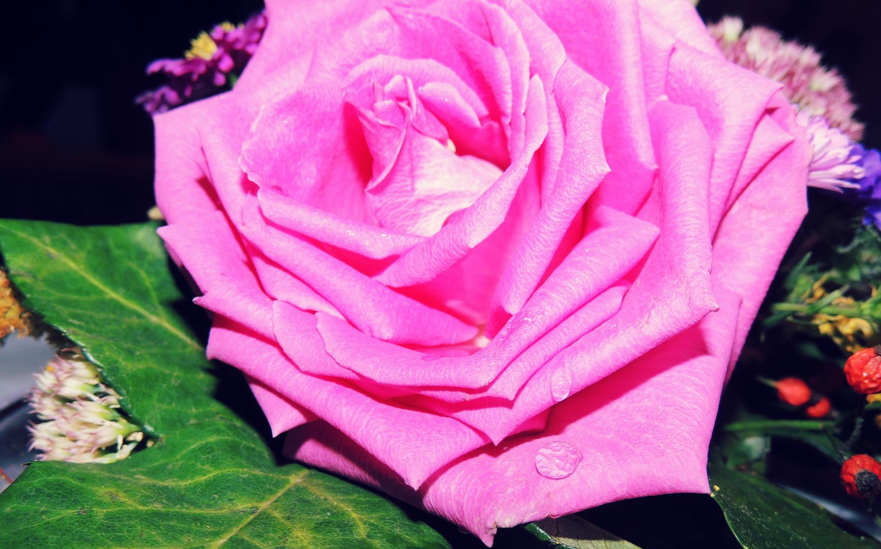 Blume mit einem Tropfen